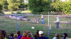 Wolf Park 2