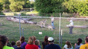 Wolf Park 3