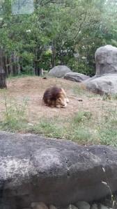 Zoo (10)