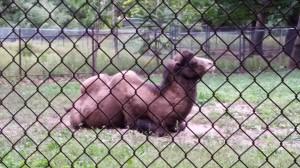 Zoo (11)