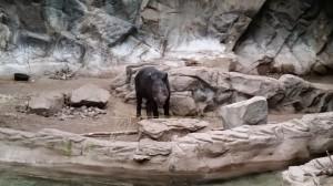 Zoo (13)