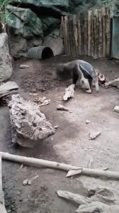Zoo (14)