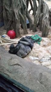 Zoo (19)