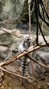 Zoo (20)