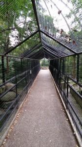 Zoo (23)