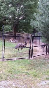 Zoo (26)