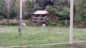 Zoo (29)