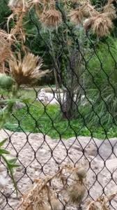 Zoo (8)
