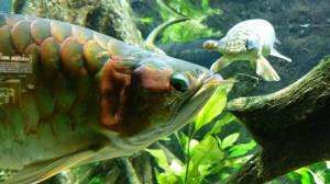 Aquarium (11)