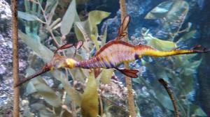 Aquarium (13)