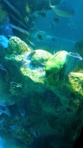 Aquarium (14)