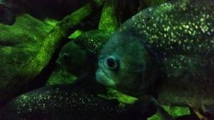 Aquarium (17)