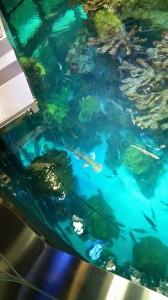 Aquarium (21)