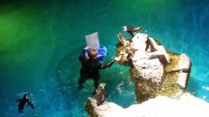 Aquarium (22)