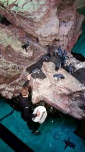 Aquarium (23)