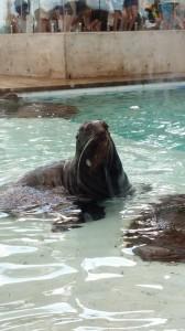 Aquarium (26)