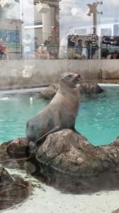 Aquarium (27)