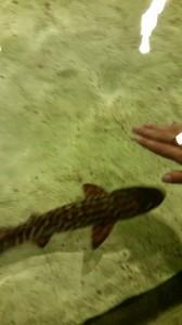 Aquarium (32)