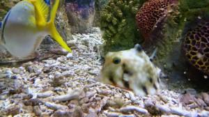 Aquarium (7)