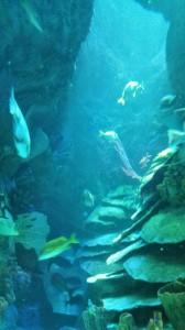 Aquarium (8)